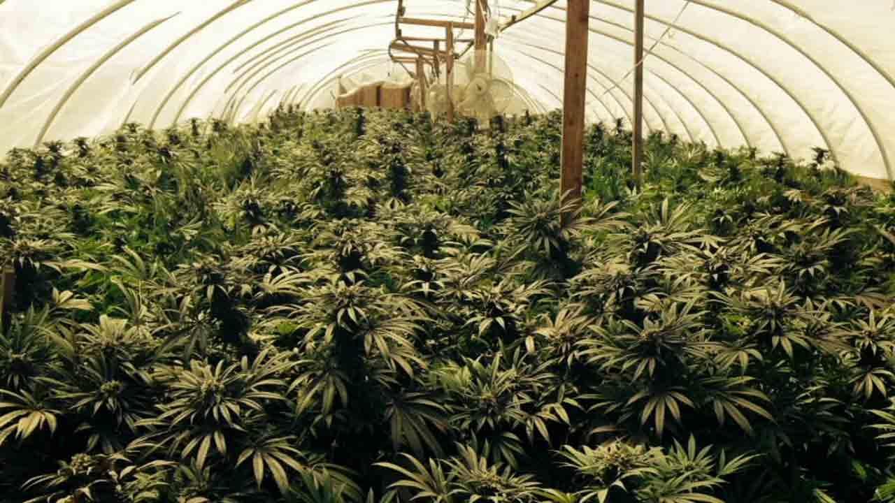 Cultivator and Processor Winners | Maryland Marijuana Card | Green Way Consults
